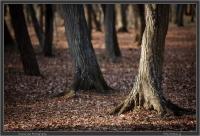Jindai Trees